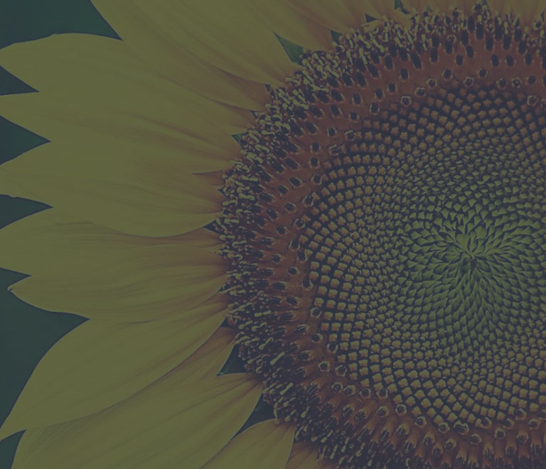 Sunflower Group brand design